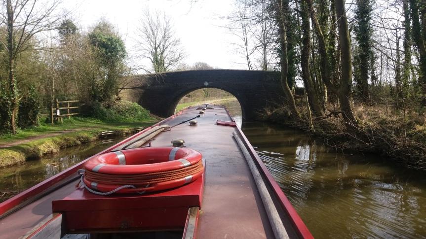 Mallard Under Bridge